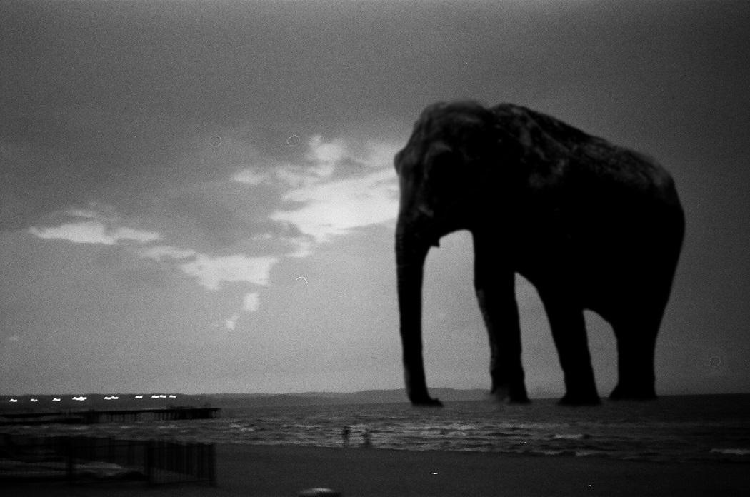 Powrót słonia